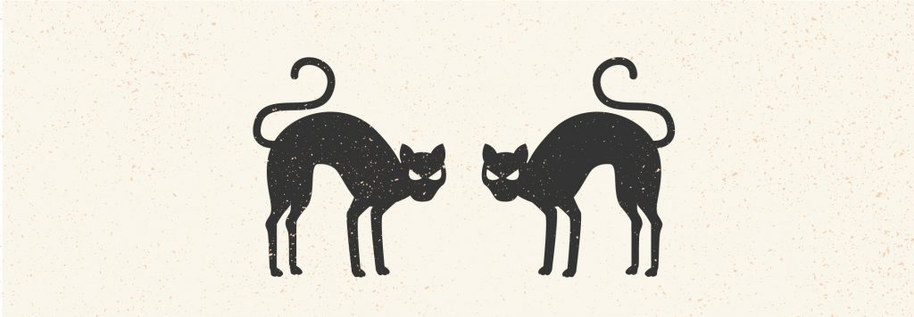 Cats, Halloween, brand, branding, Branding By Brittany, Brittany Pickrem, brand expert, Halifax, Nova Scotia